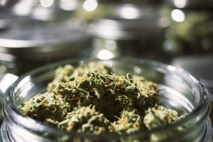 Tennessee State and Federal Penalties for Marijuana Possession